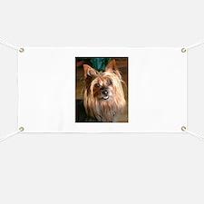 Australian Silky Terrier headstudy Banner