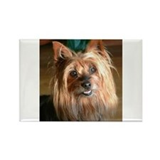 Australian Silky Terrier headstudy Magnets
