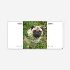Pug in the Garden Aluminum License Plate