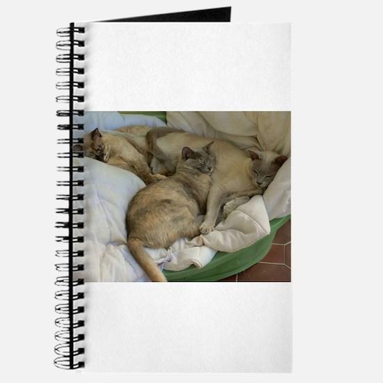 Burmese Cats asleep Journal