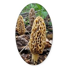 Morels Decal