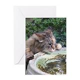 Birdbath cat cute Greeting Cards