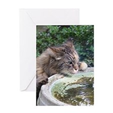 Maine Coon cat birdbath Greeting Card