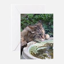 Maine Coon cat birdbath Greeting Cards (Pk of 10)