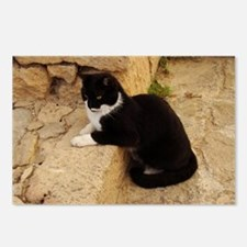Funny Tuxedo cats Postcards (Package of 8)