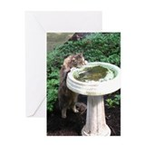 Birdbath cat cute Greeting Cards