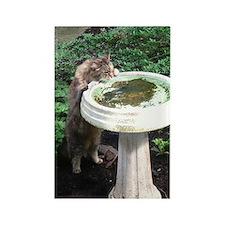 Maine Coon cat birdbath Rectangle Magnet