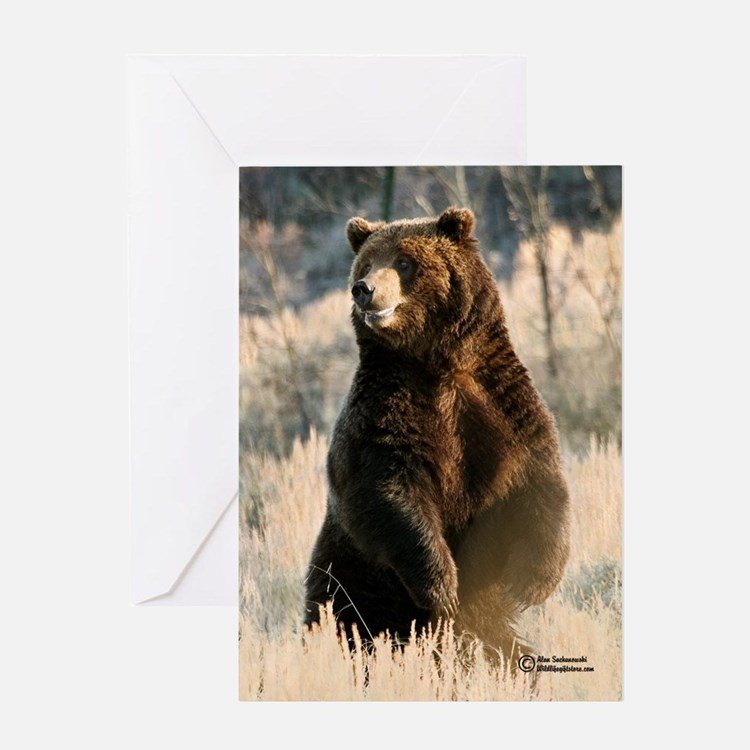 """Smiling Grizzly V.) Single Greeting Card"