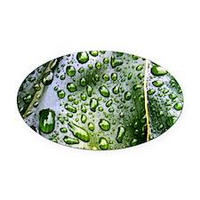 Wet Leaf Oval Car Magnet