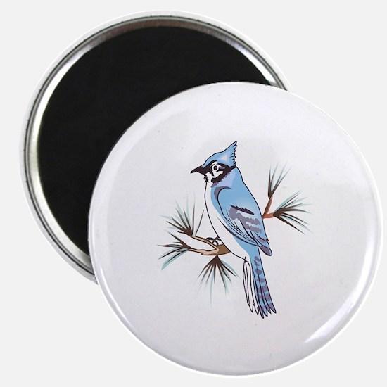 BLUEJAY Magnets