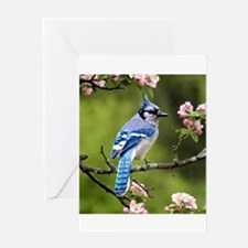 Bird Photo Greeting Cards