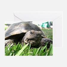 Helaine's Desert Tortoise Greeting Card