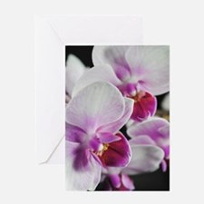 Two Pink White Orchids Greeting Card