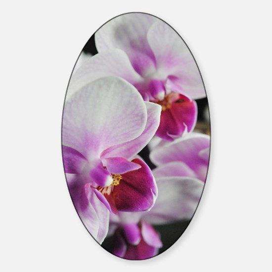 Two Pink White Orchids Sticker (Oval)