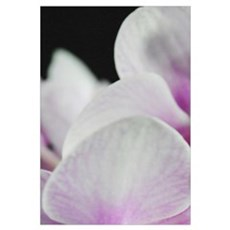 Two Pink White Orchids Framed Print