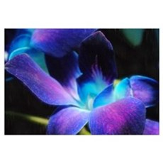 Two Purple Orchids Framed Print