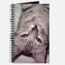 silver bengal kitten Journal