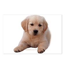 Golden Retriever Puppy Lying Down Postcards (Packa