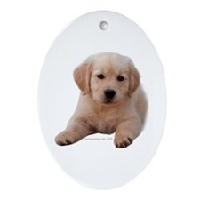 Golden Retriever Puppy Lying Down Oval Ornament