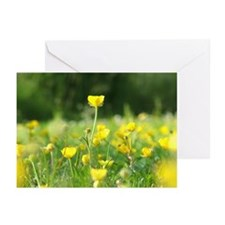 Buttercup Greeting Cards (Pk of 20)