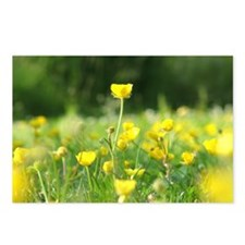 Buttercup Postcards (Package of 8)