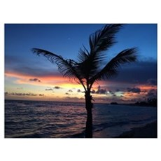 Beach Sunset Palm Tree Poster