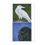 Crow Baby & White Crow Mini Poster Print