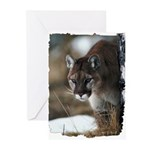 Mountain Lion Greeting Cards (Pk of 20)