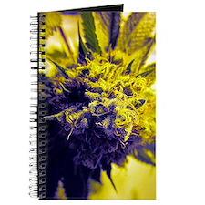 Kush Cannabis Journal