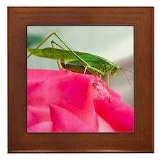 Helaine's Grasshopper Framed Tile