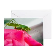 Helaine's Grasshopper Greeting Card