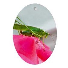 Helaine's Grasshopper Oval Ornament