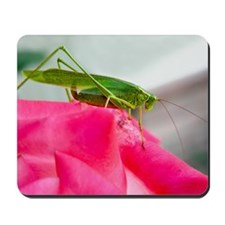 Helaine's Grasshopper Mousepad