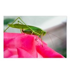 Helaine's Grasshopper Postcards (Package of 8)