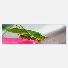 Helaine's Grasshopper Bumper Bumper Bumper Sticker