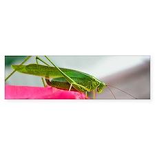 Helaine's Grasshopper Bumper Bumper Sticker
