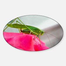 Helaine's Grasshopper Oval Decal