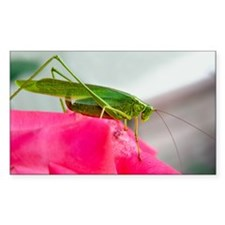 Helaine's Grasshopper Rectangle Decal