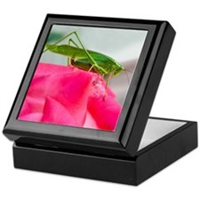 Helaine's Grasshopper Keepsake Box