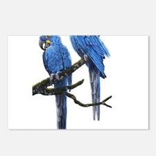 Hyacinth macaws Postcards (Package of 8)