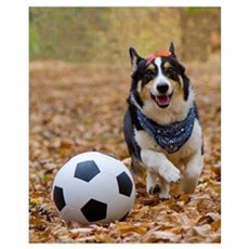 Corgi Playing Soccer Poster