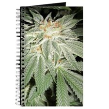 White Kush Cannabis Journal