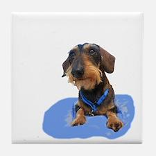 Wirehair Dachshund Tile Coaster