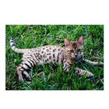 Funny Bengal cats Postcards (Package of 8)