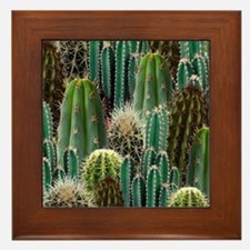 CACTUS PATCH Framed Tile