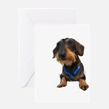 Wirehair Dachshund Greeting Card