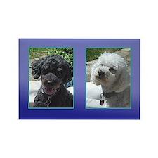 Black and White Miniature PoodlesRectangle Magnet