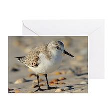 Sand Piper and Seashells Greeting Card