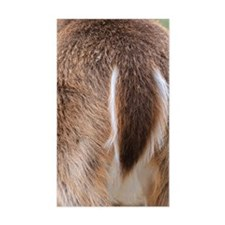 Deer Tail Decal