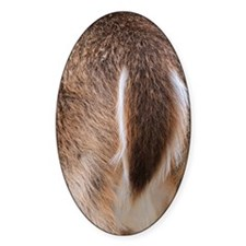 Deer Tail Decal